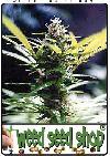 cannabis seeds Master Kush