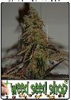 graine cannabis Jock Horror