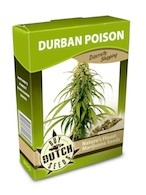 graine cannabis Durban Poison