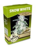 cannabis seeds Snow White