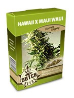 cannabis seeds Hawaii x Maui Waui
