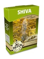 cannabis seeds Shiva