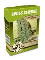 cannabis seeds Swiss Cheese