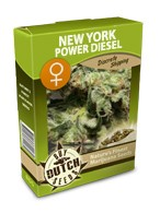 graine cannabis New York Power Diesel fminise