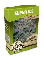 graine cannabis Super Ice